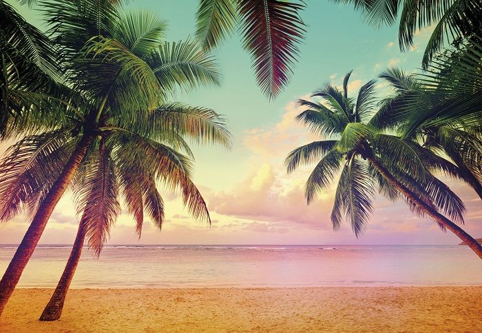 miami beach amp palms giant paper wallpapers by homewallmurals